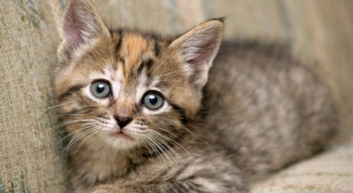 What to do if the kitten won't go to the bathroom really bad