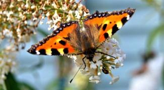 Откуда появляются насекомые весной