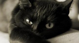 Как вылечить кота в домашних условиях