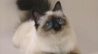 У кошки кровь из заднего прохода: причины и лечение