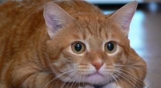 Можно ли отличить кота от кошки по морде