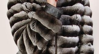 Как правильно ухаживать за мехом шиншиллы