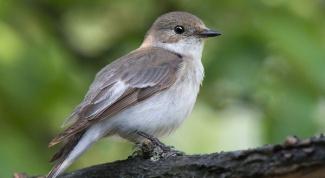 Птицы спасут вас от депрессии и других недугов