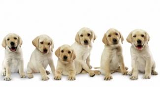 Как ухаживать за домашними животными в сезон линьки