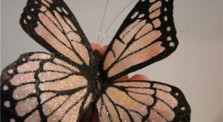 Unusual butterfly organza