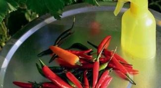 Как избавиться от тли на домашних растениях без химии