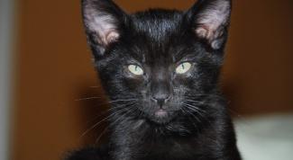 Можно ли держать кошек за шкирку