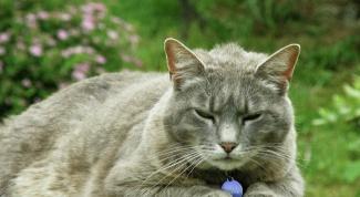 Как вылечить лишай у кошки в домашних условиях