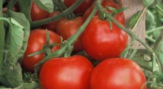 Features tomato