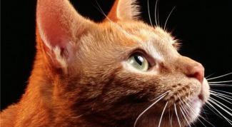 Как ухаживать за взрослой кошкой