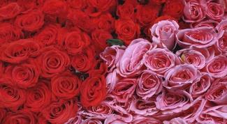 Что можно сделать с лепестками роз