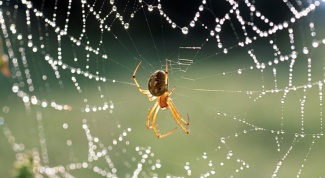 What are superstitions about spiders