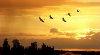 Какие птицы улетают в теплые края
