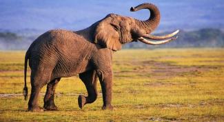 Какое животное живет дольше всех