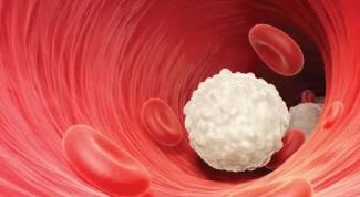 Что делать, если лейкоциты понижены