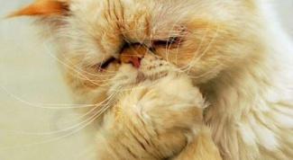 Что делать, если у котенка рвота