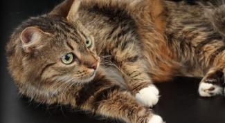 Признаки беременности кошки