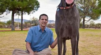 Какая порода собак самая большая  в мире