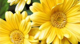 Что символизируют желтые цветы