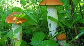 Рецепты грибных супов