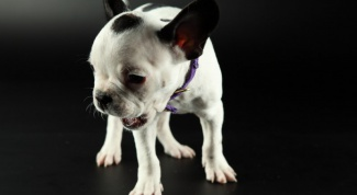 Что делать, если щенок не дает себя погладить