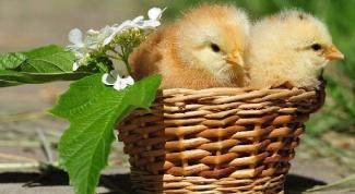 Как удобрять почву куриным пометом