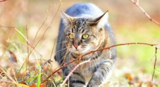 How to treat hormonal failure in cats