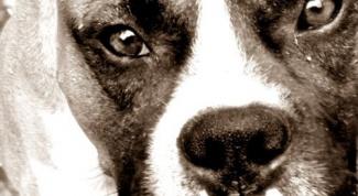 Какие первые симптомы бешенства у собак