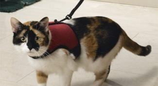 Как выбрать поводок для кошки