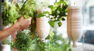 Как вырастить подарочный сад