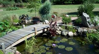 Какие растения выбрать для декоративного пруда