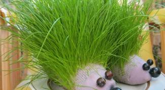 Как сделать травяного ежика из носка
