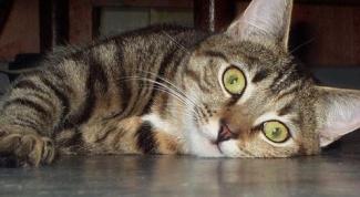 Воспитание кошек.