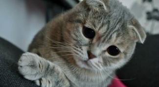 Что делать, если кота тошнит после еды