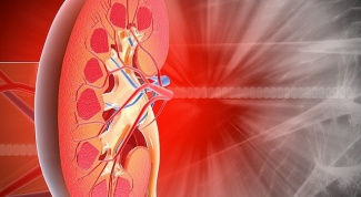 The structure and function of the renal pelvis