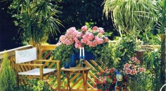 Какие расстения подойдут для тенистого сада