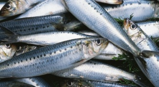 What to cook herring