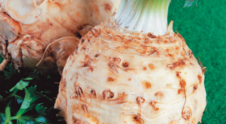 What to make of celery root