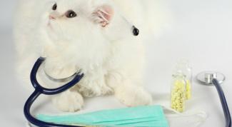 Как проводят стерилизацию кошки