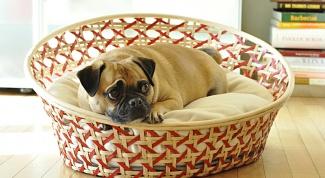 Как сделать кровать для питомца
