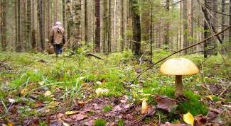 Что делать, если заблудился в лесной чаще