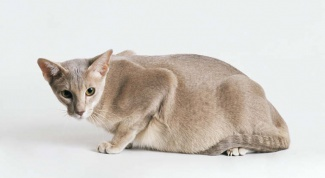 How the pregnancy in cats