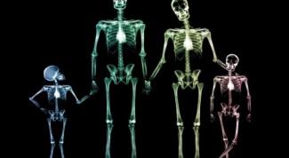 Сколько костей в теле человека