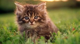Какие существуют популярные кошачьи имена