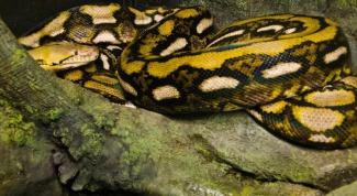 Какая самая большая змея в мире