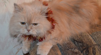 How to treat the wound after castration of a cat