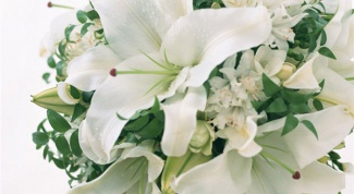 Советы по выбору цветов