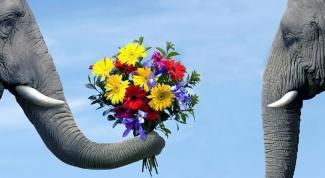 Как следует дарить цветы по этикету