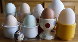 Куриные, перепелиные, утиные - такие разные яйца
