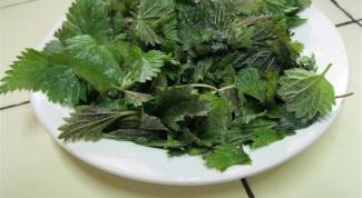 Что приготовить из молодой крапивы: простые и полезные рецепты